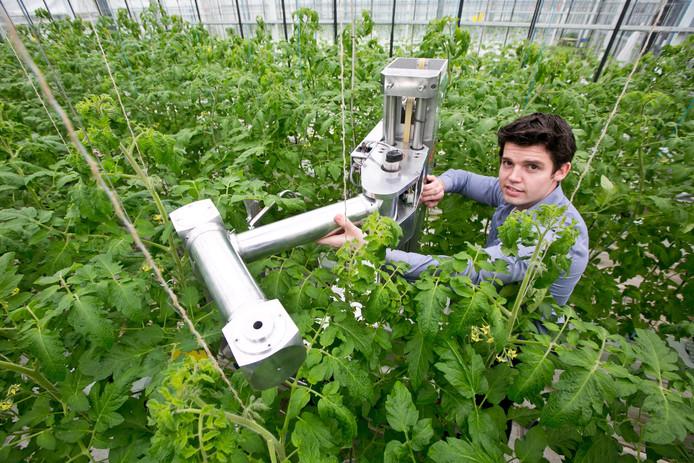 Een robotarm helpt tussen de tomatenplanten op een tomatenkwekerij in het Westland.