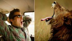 Waarom lummelen van levensbelang is - en wat we in dat opzicht van andere dieren kunnen leren