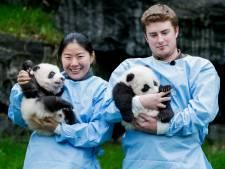 Fin du suspense: les bébés pandas de Pairi Daiza s'appellent...