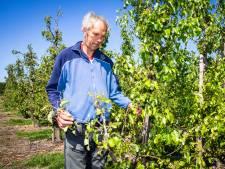 Fruitoogst van Cees de Ruiter 'kan de appelmoes in' na plaatselijke hagelbui in Numansdorp