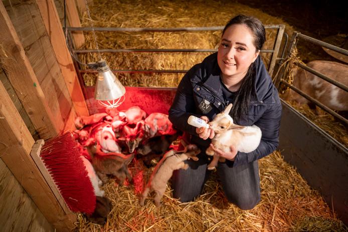 Boerderijbeheerder Denise van Lieshout heeft het druk met de geboortegolf.