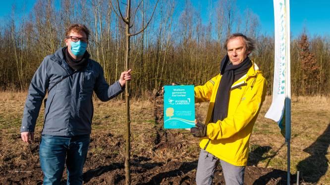 Aartselaar treedt toe tot Regionaal Landschap Rivierenland en krijgt lindeboom als welkomstgeschenk