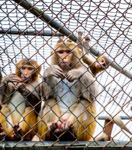 Zijn dierproeven straks verleden tijd?