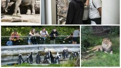 """Budgetreisblogster zocht goedkoopste tickets voor Zoo, Pairi Daiza en Grotten van Han: """"Wie een beetje oplet, kan mooie kortingen versieren"""""""