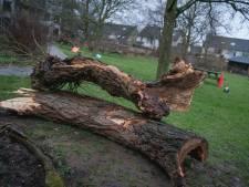 Omwonenden honderd jaar oude wilg balen, boom toch gekapt