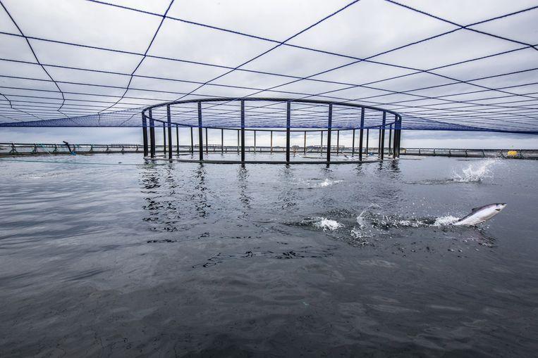 Een overdekt zalmbassin. Duizenden tonnen chemicaliën tegen luizen verdwijnen jaarlijks in zee.  Beeld Eric Fokke