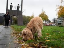 Hondenbelasting Buren gaat in tien jaar naar nul euro