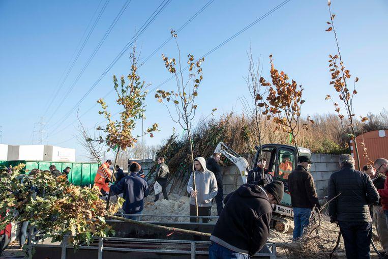 Zo'n 100 Bilzenaren komen een klimaatboom afhalen. Ze krijgen die gratis.
