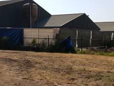 2100 varkens stikken in stal Maarheeze door stroomuitval en warmte