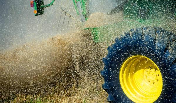 Alle 16 miljard schakels en 108.000 genen van tarwe in kaart gebracht