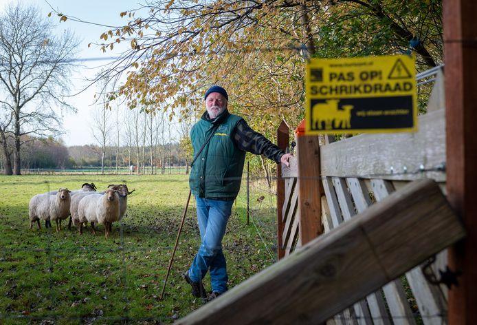 Piet Filmer uit Vaassen heeft zijn Drentse heideschapen goed beschermd tegen de wolf.