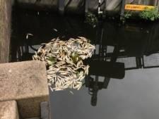 Dode vissen aangetroffen door warme weer, maar hoe zit dat precies?