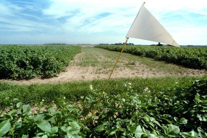 Aardappelvelden op proefboerderij Rusthoeve in Colijnsplaat.