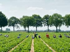 Vietnamezen gaan straks onze peren plukken: 'We kunnen niet zonder arbeidsmigranten'