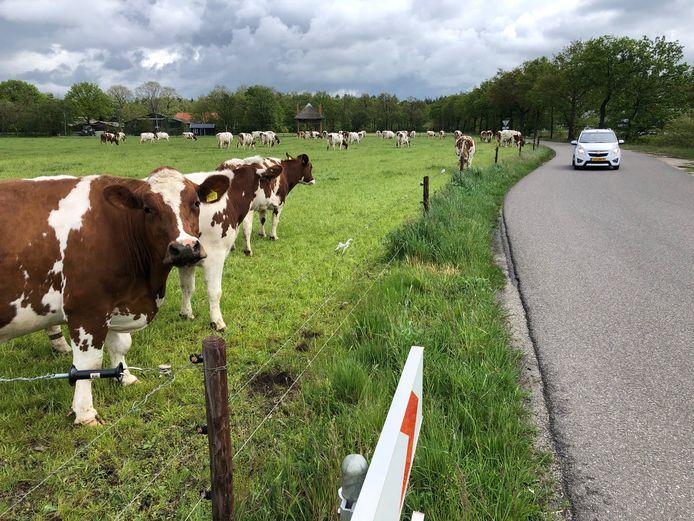 De Bosdreef in Uden, de weg naar onder meer Naat Piek, het Slingerpad en het speelbos, is volgens het CDA gevaarlijk gezien alle verkeer. Op de achtergrond ligt boerderijwinkel De Bosrand.