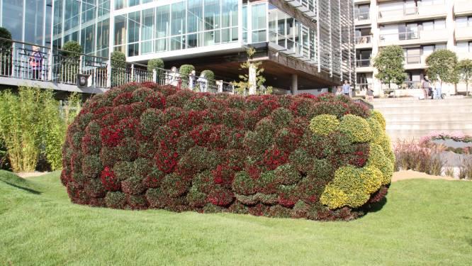 IN BEELD. Jawel, dit is een 'bloemenaubergine': weekend fleurige pracht tijdens Koket Koksijde, met steun van Gentse Floraliën