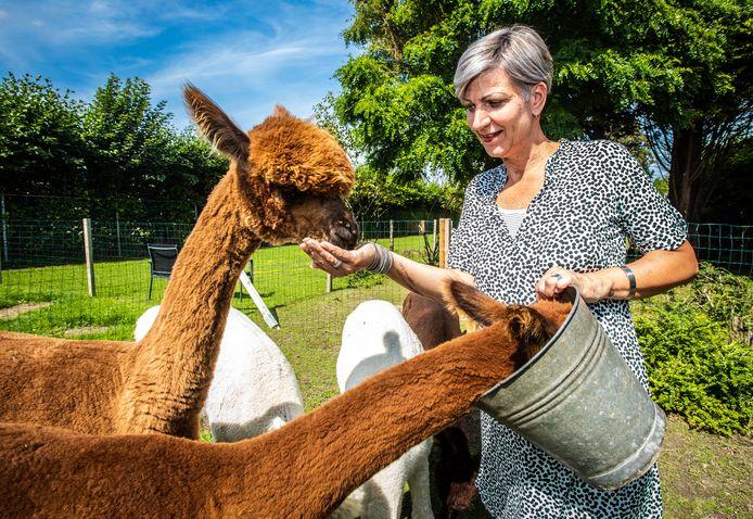 Mirella Westhuis met haar alpaca's.
