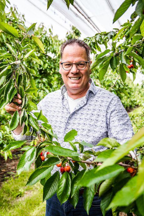 Werk aan weg geeft kersentelers Hoeksche Waard grote zorgen: 'Óns seizoen begint en we zijn onbereikbaar!'