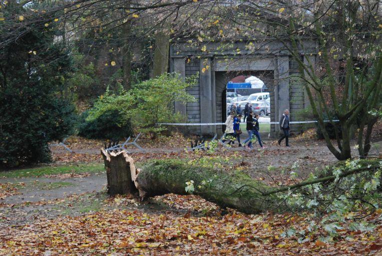 In het Citadelpark in Gent waaide eerder al eens een oude boom om. De stad bekijkt of maatregelen nodig zijn. Beeld Erik De Troyer