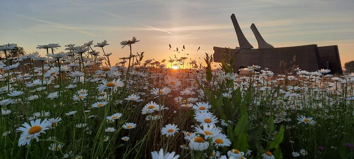 Het origineel van de kiek waarmee Gerrit Willems de zomerfotowedstrijd van de gemeente Rijssen-Holten won.