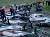 Schokkende beelden: ruim 1400 dolfijnen geslacht op Faeröer-eilanden