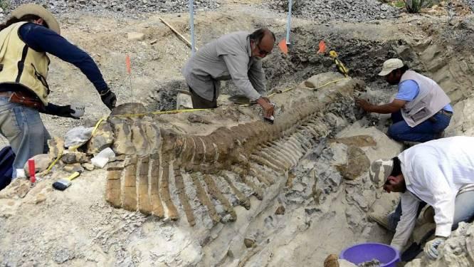 Nieuwe 'spraakzame' dinosaurussoort ontdekt in Mexico