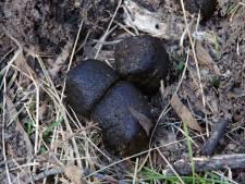 Hierom hebben wombats kubusachtige keutels