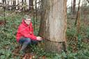 Eric Desmaele is tevreden dat de bomen misschien nog gered kunnen worden.
