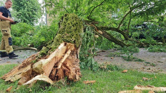 Een boom met boomrot bezorgde de brandweer in Hengelo een hoop werk.