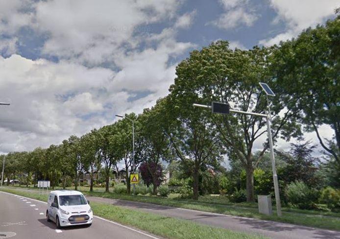 Bomen langs de N489.