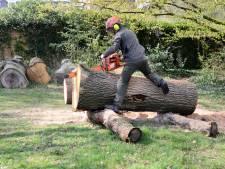 Boomstronken krijgen in Almelo tweede leven als parkmeubilair