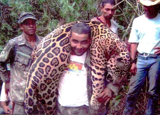 De jagersbende maakte duizenden beschermde dieren buit, waaronder deze jaguar in 2016.
