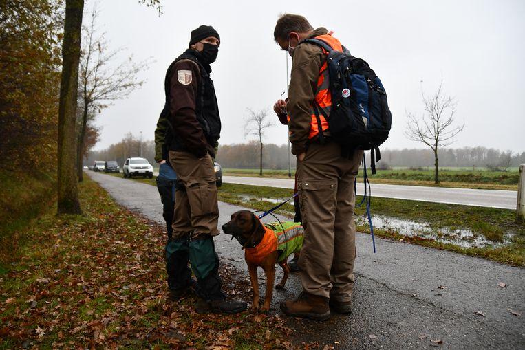 Het Agentschap Natuur en Bos en vrijwilligersteams gingen op zoek naar de gewonde wolf, maar zonder succes. Beeld BELGA