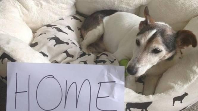 Dove en blinde hond levend teruggevonden in moeras