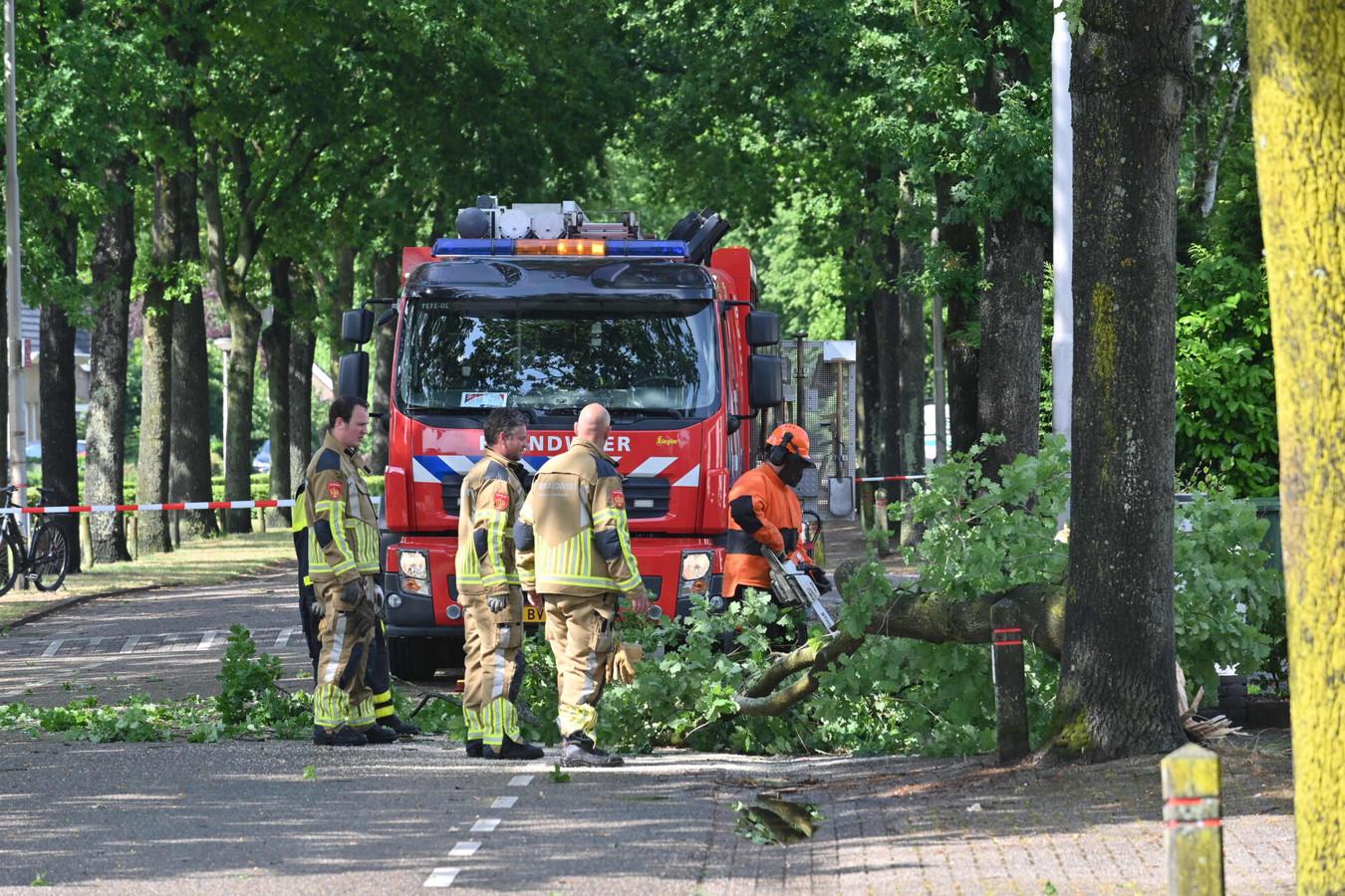 Boom op de weg in Prinsenbeek Breda.