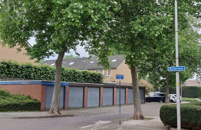 De 11 platanen in de Rijssense Van Broekhuizenstraat worden voorlopig niet geveld.