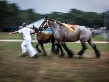 'Zonder fokpaardendag in Lierop ook geen kermis'
