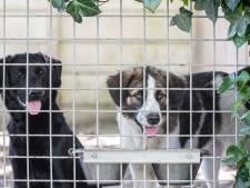 Baasjes dumpen nu al weer coronahonden, wachtlijst bij dierenasiels: 'Houd mijn hart vast voor de zomer'