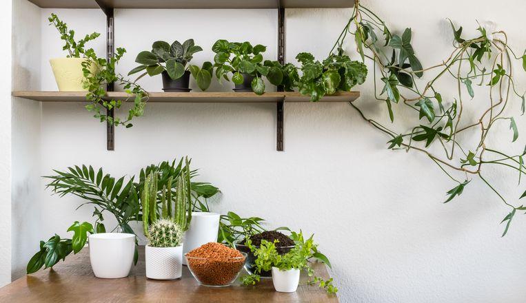 Planten kunstwerk Beeld Getty Images