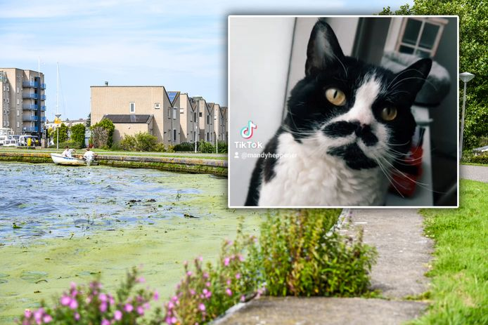 In Alphen worden de laatste tijd veel dode katten in het water gevonden zoals hier langs de Heijmans Wetering. Ook kat Sniper verdronk.