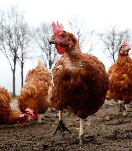 Vogelgriep op Dierenweide Vleuten: 56 dieren geruimd