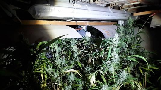 De politie vond in de kelder van de winkel een wietkwekerij met meer dan 200 cannabisplanten