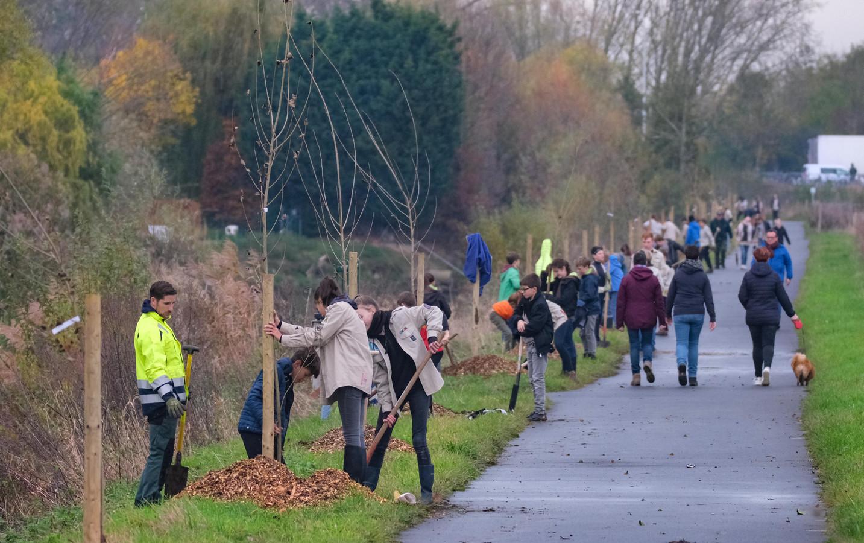 De rij populieren aan de Vleterenbeek.