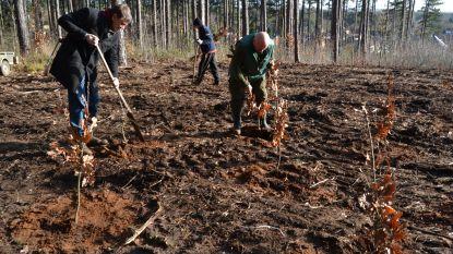 Groen stelt bosplan voor: elk jaar 1.360 voetbalvelden bos erbij