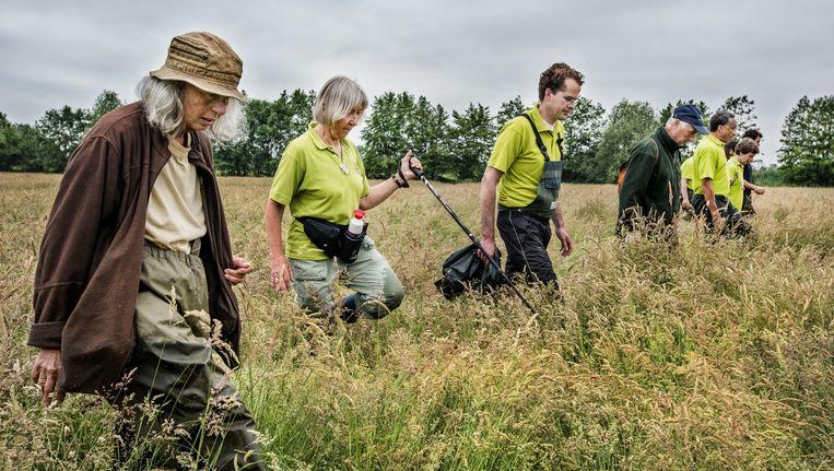 Voordat het hooiland wordt gemaaid, speuren vrijwilligers van Utrechts Landschap naar jonge reekalfjes. Beeld Raymond Rutting / de Volkskrant