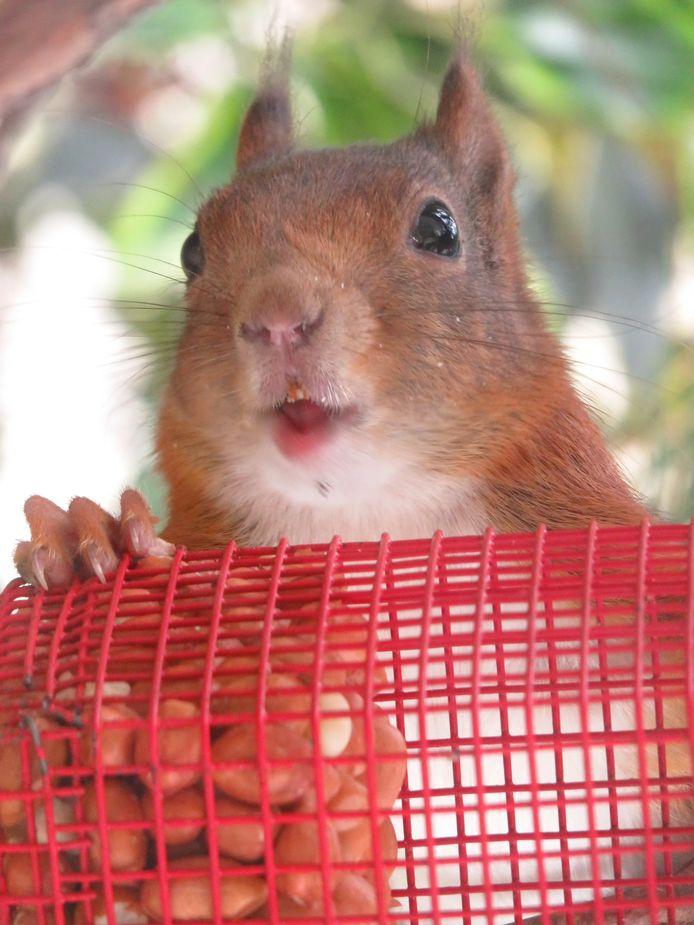 Dit eekhoorntje zat in de voortuin van Astrid Boot