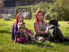 Opvang van vechthonden in Tollebeek krabbelt weer beetje op: 'We halen pas opgelucht adem als alles achter de rug is'