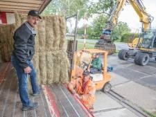 Limburgse boeren hartstikke blij met Zeeuws hooi: 'Hartverwarmend. Echt super'