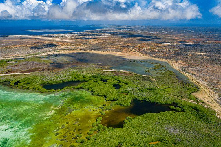 Het mangrovesysteem van Lac Bay vanuit de lucht.   Beeld Lorenzo Mittiga/INSTITUTE