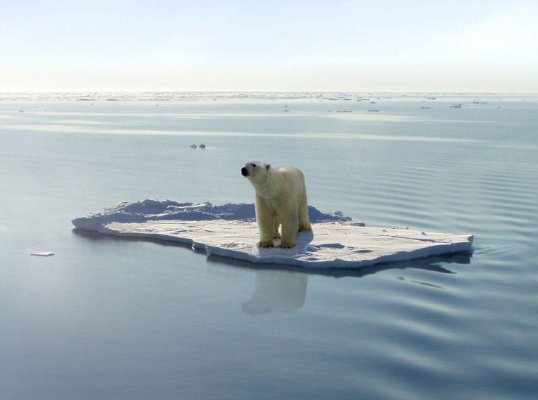 Bogus de ijsbeer Beeld Jan Will